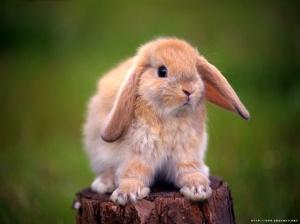 Een lief konijn, maar geen heilige om te vereren